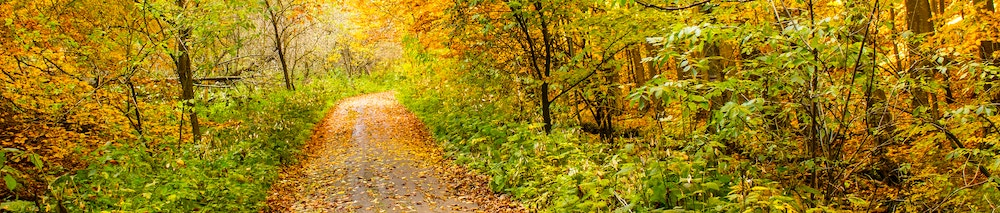 Path through the woods in fall